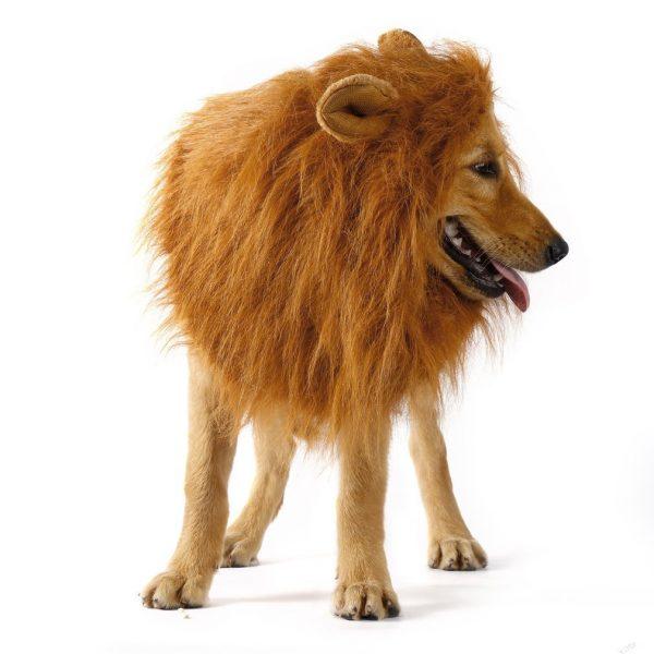 Disfraz de león para perro