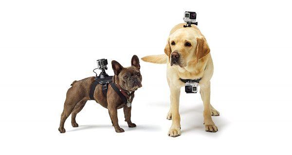 Arnés de cámara GoPro para perros GoPro Fetch