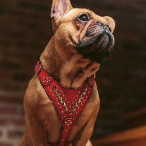 Arnés de cuero para perros pequeños