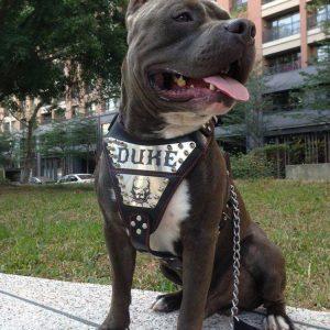 Arnés de cuero personalizado para perros