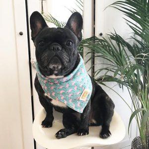 Bandana para perro con motivo de flamencos