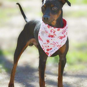 Bandana reversible para perro con motivo de flores y ciervos