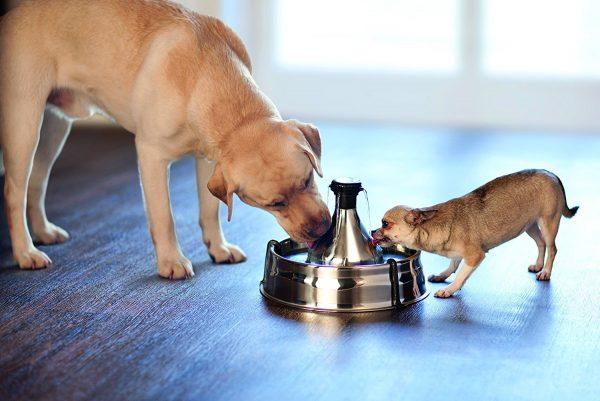 Bebedero automático de agua para perros 360 Drinkwell