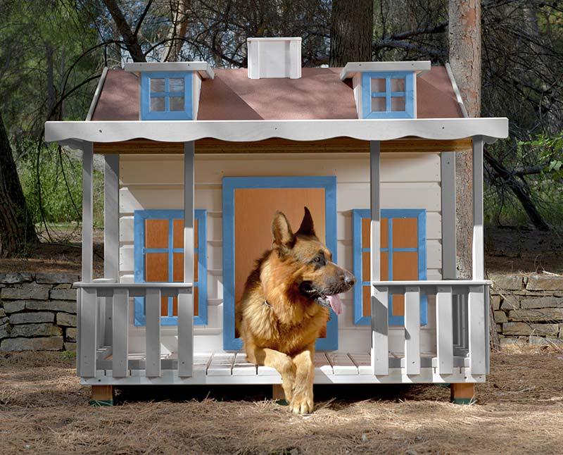 niche isolée pour chien
