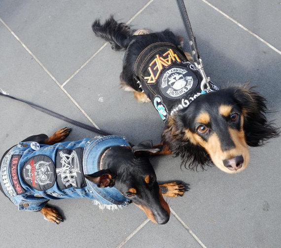 Chaleco vaquero heavy para perro