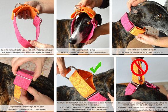 Collar para perro Martingale estilo vintage