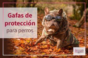 Gafas de protección para perros…¿en serio?