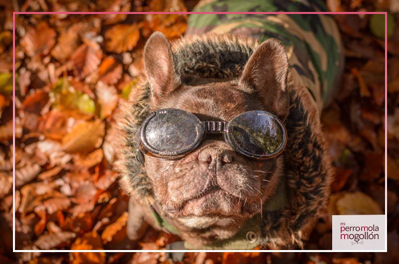 Gafas para perros Doggles