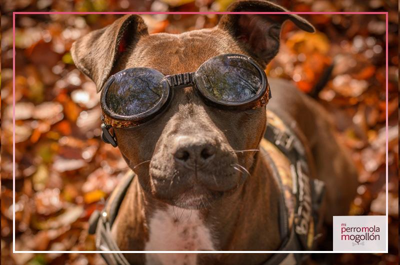 Gafas para perro Doggles