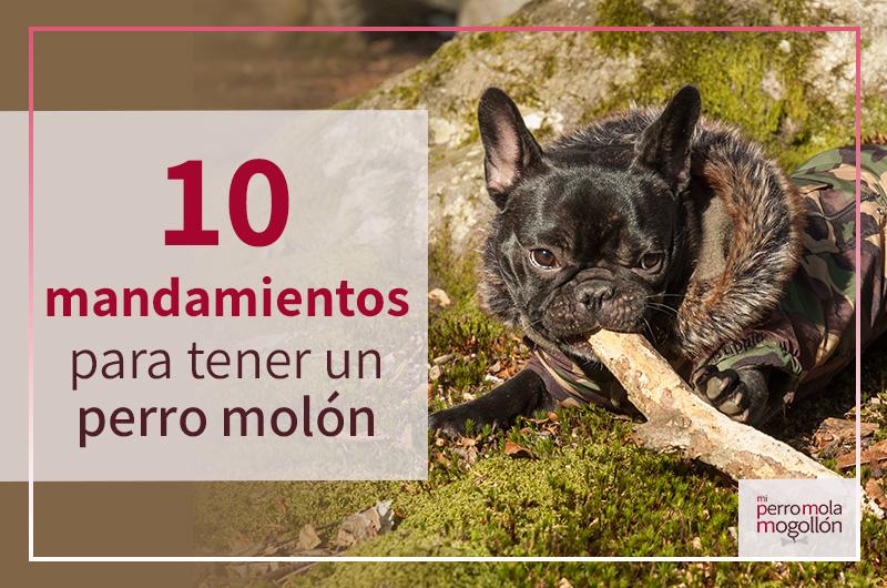 10 mandamientos para tener un perro molón