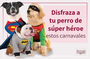 Disfraza de súper héroe a tu perro estos Carnavales