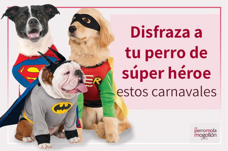 Disfraza a tu perro de súper héroe estos carnavales