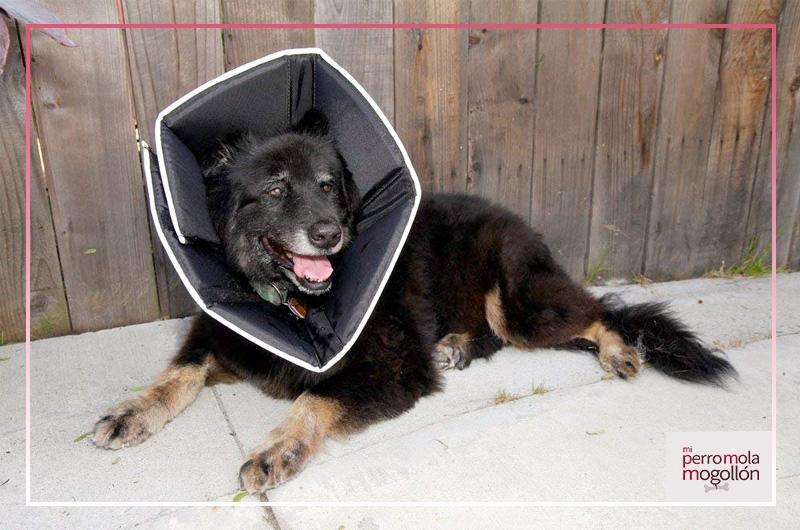 Cono de recuperación para perros Comfy